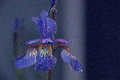 Digitally altered orchid