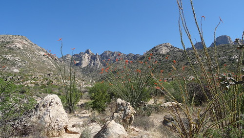 Catalina State Park Hike
