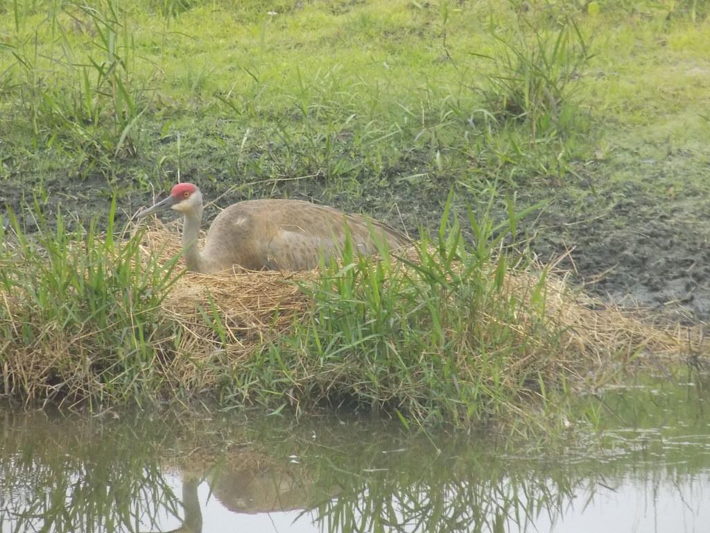 SACR nest