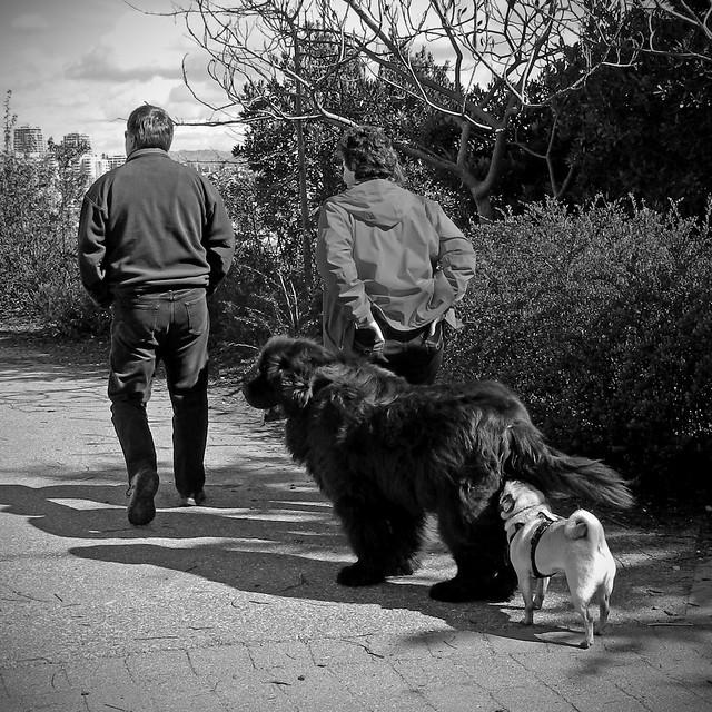 North Vancouver Dog Rescue