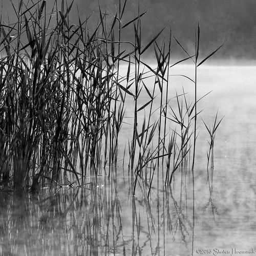 bw lines reeds hardwick morningmist whitelake vassfarmstead