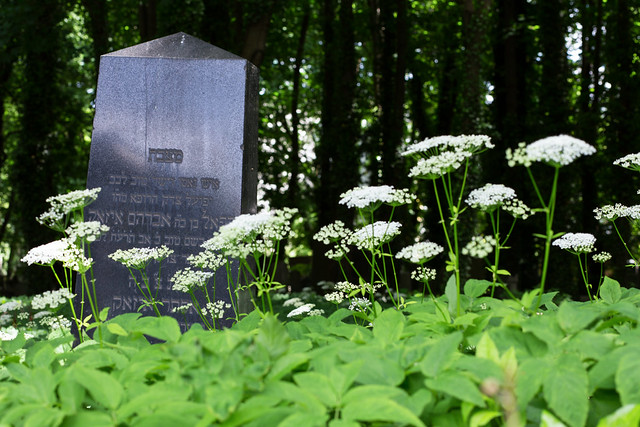 Photo:Grave in the Flowers By danielfoster437