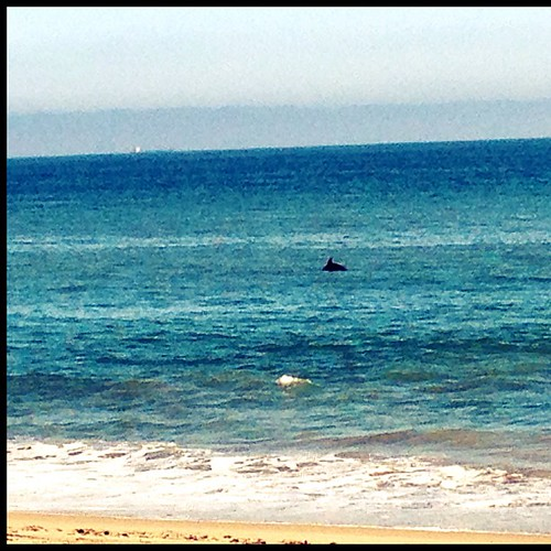 We got to see a school of dolphins swimming along Hwy 1. Amazing.