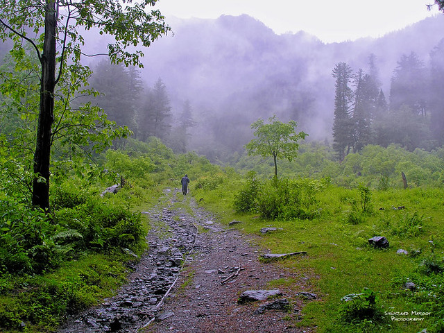 Sharan, (Manchi Forest) Kaghan Valley