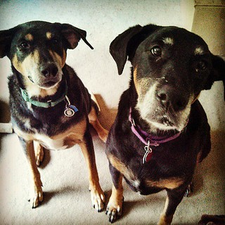 You has cookie? #dogstagram #love #rescue #adoptdontshop