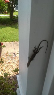 Lizard on the front porch