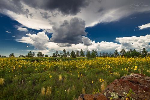 flowers trees summer arizona storm field clouds canon landscape rocks meadow flagstaff wildflowers northernarizona dslr coconinocounty buffalopark canoneos7d
