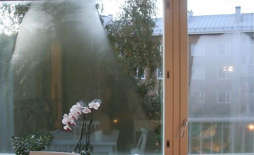 Ikkunahuurteessa