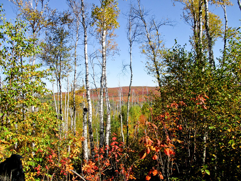 Fall Colors on SHT