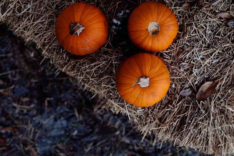 Fall-Halloween 2013-11