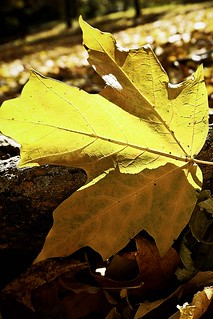 A Golden Leaf - The Glorious Art of Autumn by Kelly Davenport
