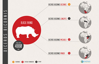 Black Rhino Infographic