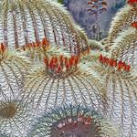 Cactus, California, 2013