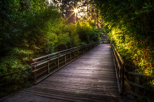 california bridge trees light sunset plants sun green nature beautiful canon landscape los twilight glow angeles path bridges illumination sunny hdr starburst 6d