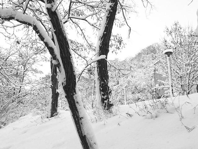 Dyskretny urok zimy / Discreet Charm Of Winter / Dariusz Sobiecki