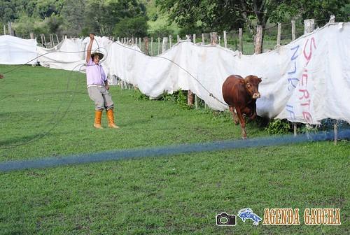 argentina gauchos jujuy paisanas criollos pialada montadechanchos