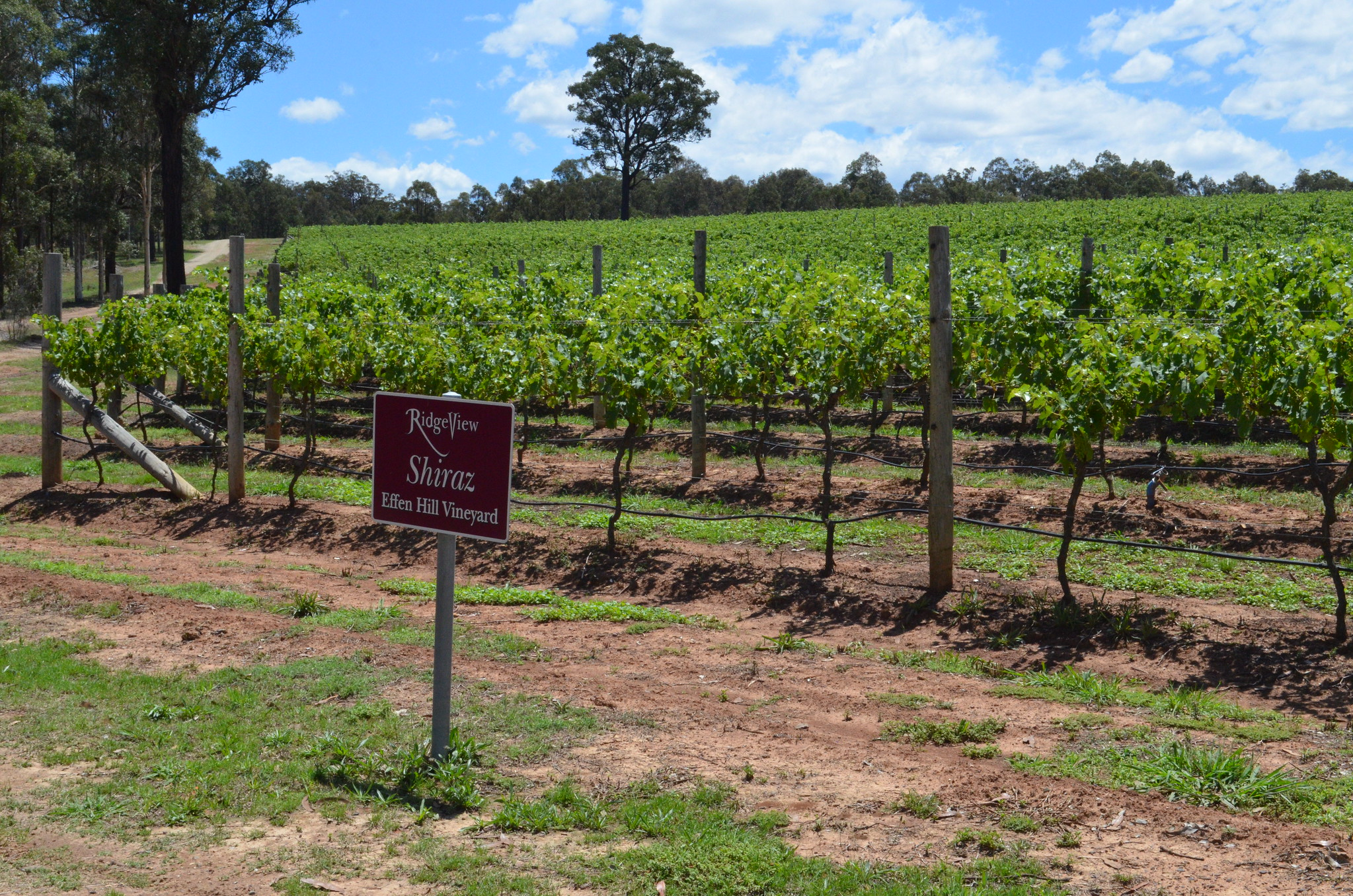 Hunter Valley Wineries by eGuide Travel
