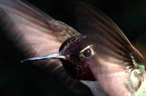 142779-1.jpg by Robert W Gilcrease