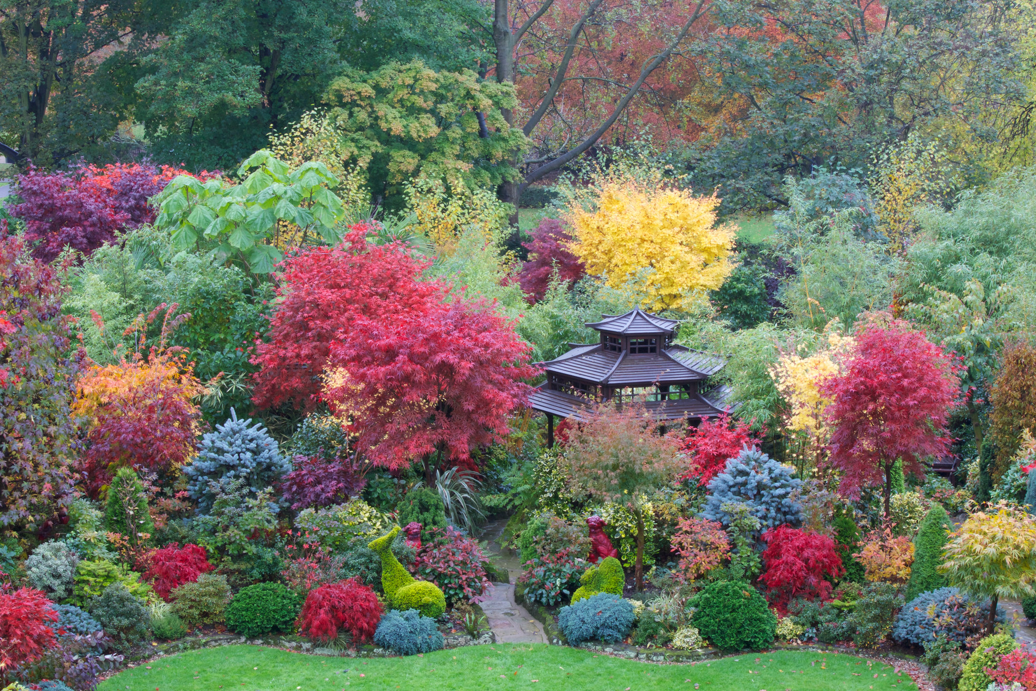 Beautiful acer colours of autumn flickr photo sharing for Gardening 4 all seasons