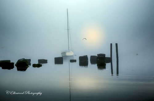 Into the Fog by windshadow2