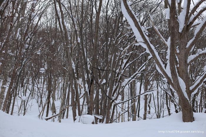 20140124_HokkaidoSki_0596 f