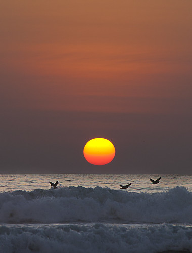 Birds pass the dying sun in Ayampe