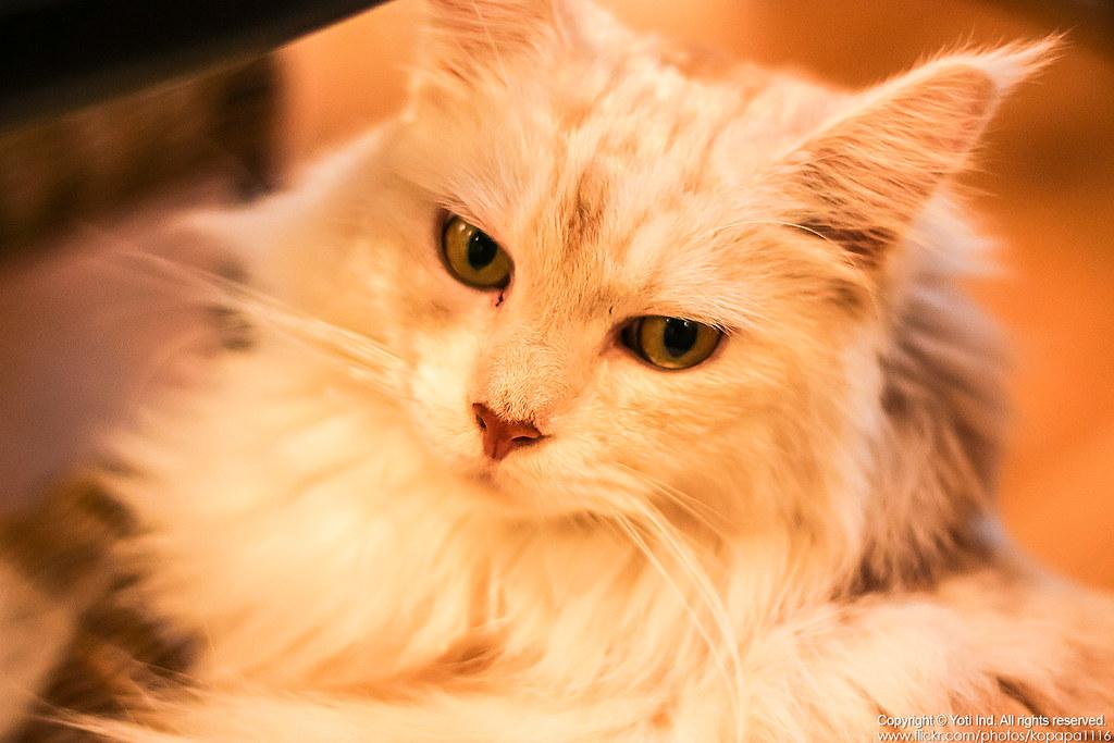 元氣貓主題餐廳 IMG_6163