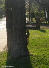 sunset squirrel silhouette