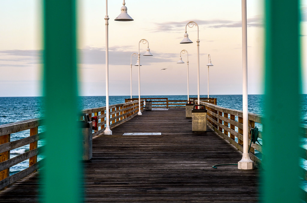 Daytona Beach pier bird