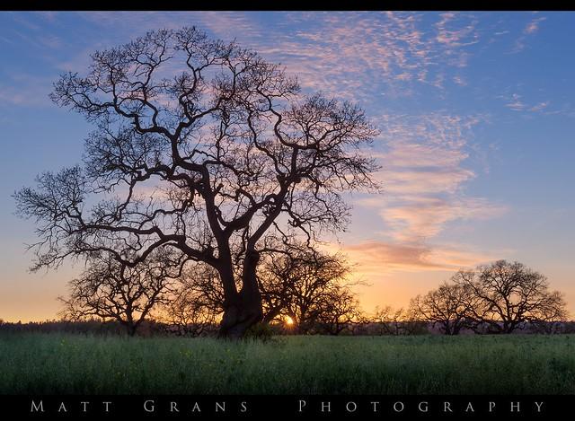 Sonoma County Sunset