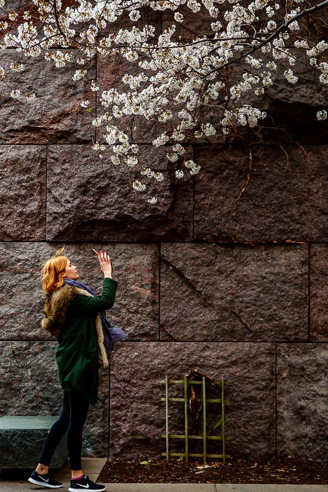 2017 华盛顿樱花-9