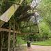 17-04-17_BotanicGarden_P1020684