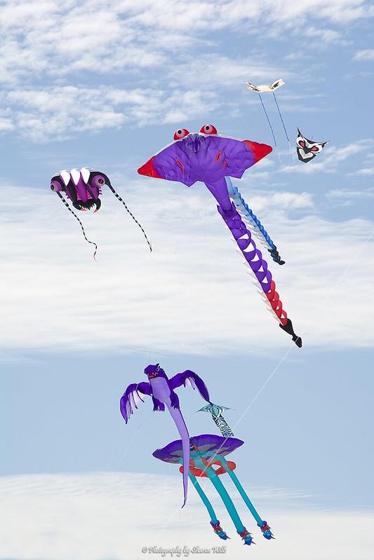 Flying Kites at the Adelaide International Kite Festival