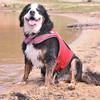 My old lady has a great morning at the lake. #dogsofinstagram #bernesemountaindog #thisismypack #waterdog