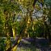 Brampton Woods - Bluebells by davepickettphotographer