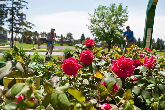 Spring Rose Planting at Knox College