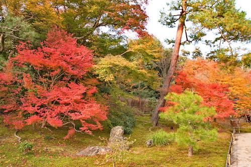 【写真】紅葉 : 宝厳院