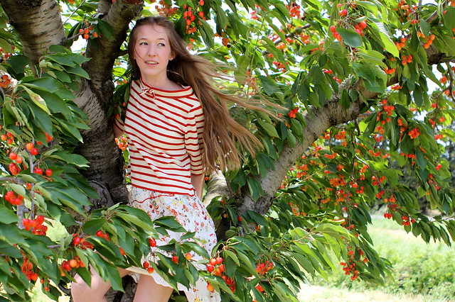 In the cherry tree