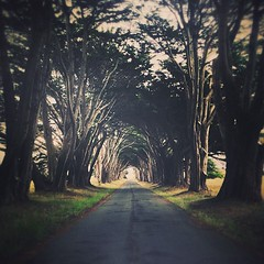 *Follow the Path* Point Reyes trees, iPhone. W/ @caseymac