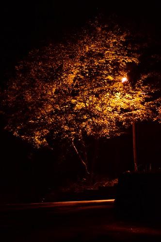 longexposure light tree lamp leaves yellow night dark gold drive parkinglot shadows lamppost
