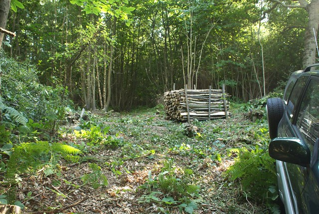 DSC_7025 coppicing