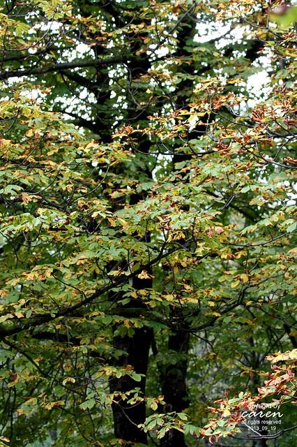 Herbstliche Impressionen 2013_09_19 272