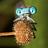 the Macro Bugs group icon