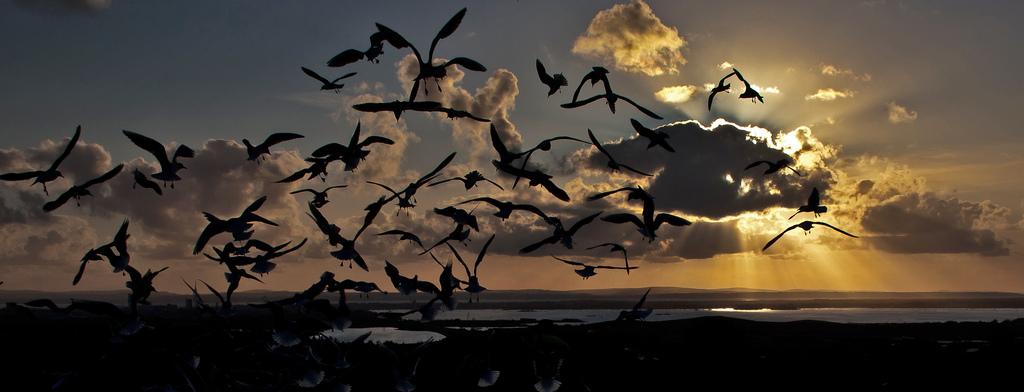 16. Gaviotas sobre la isla de Wight. Autor, Me`nthedogs