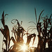 Fall Sunset by Scott T Joiner
