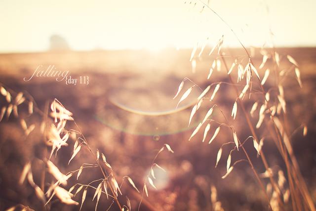 31 días de otoño (11/31)