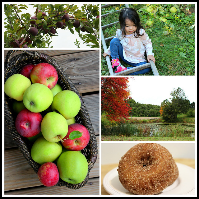 Orchard Collage 1