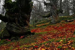El otoño, una estación especial en las tierras extremeñas.