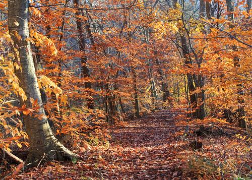 autumn nature landscape newjersey foliage chester morriscounty