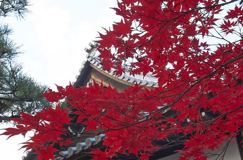 【写真】紅葉 : 廬山寺